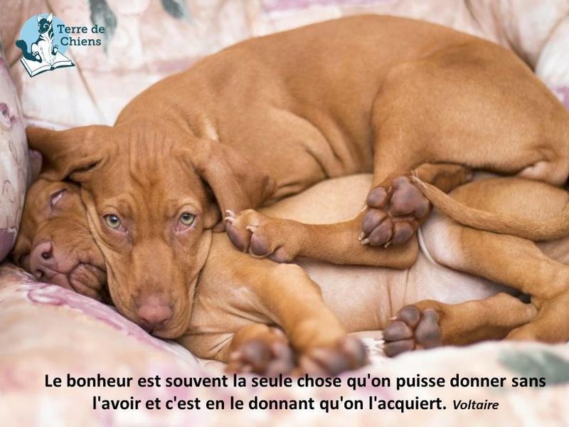 Salon de l'éducation canine et du bien-être animal - Rennes (35) - 22 avril 2018  24991510