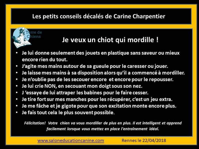 Education du chien de compagnie.fr - Page 3 24993010