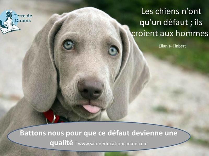 Salon de l'éducation canine et du bien-être animal - Rennes (35) - 22 avril 2018  24993310