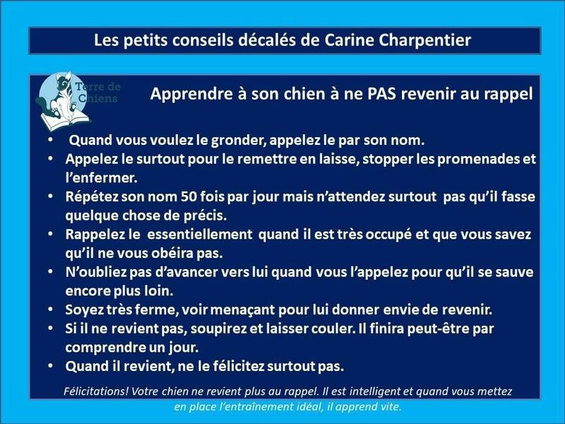 Education du chien de compagnie.fr - Page 3 25289410