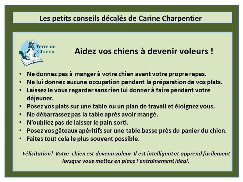 Education du chien de compagnie.fr - Page 3 25299010