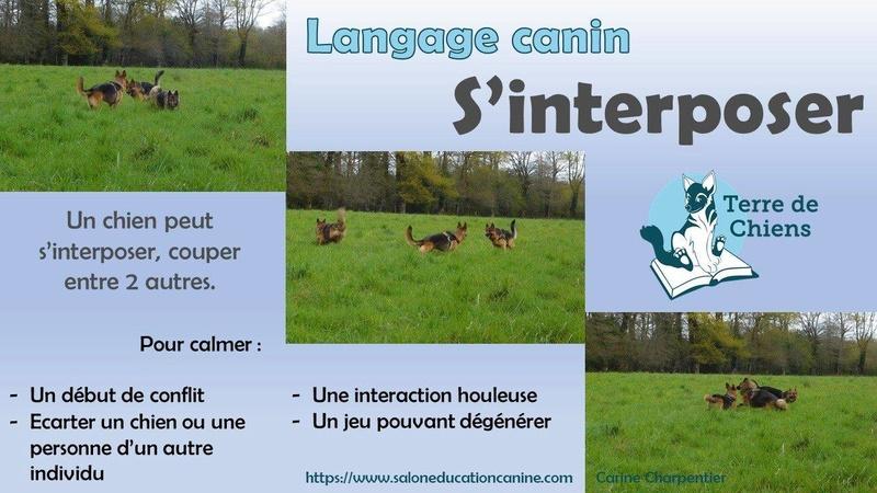 Education du chien de compagnie.fr - Page 3 25358510