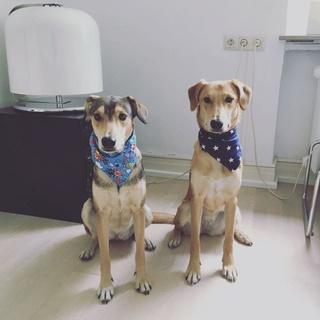 Adri und Minka haben ein liebes Zuhause gefunden 2017-012