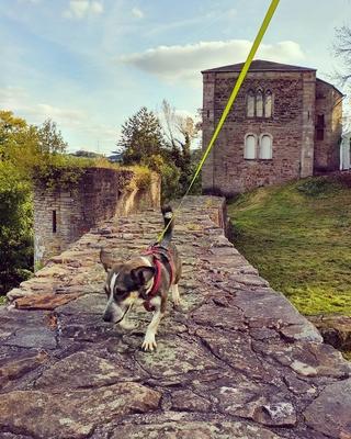 Bonita hat ein liebes Zuhause gefunden Img_2015