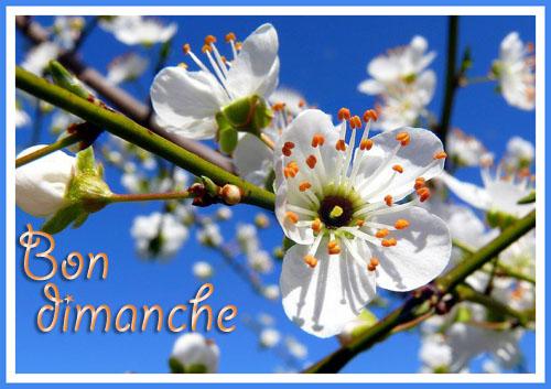 Pour se dire Bonjour - Page 15 Image26
