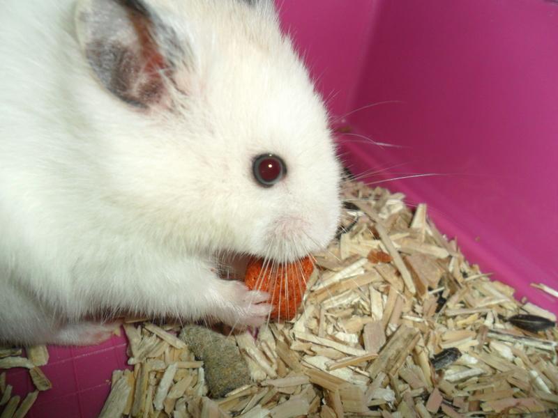 Un hamster nommé Dicoon - Page 2 Sam_1511