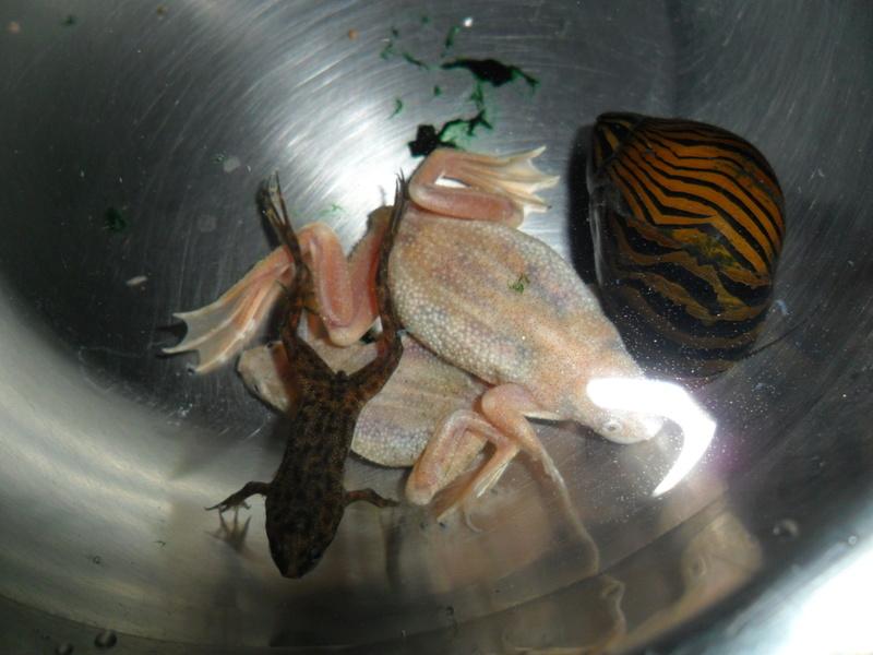 Mes grenouilles de petites tailles - Page 13 Sam_1617