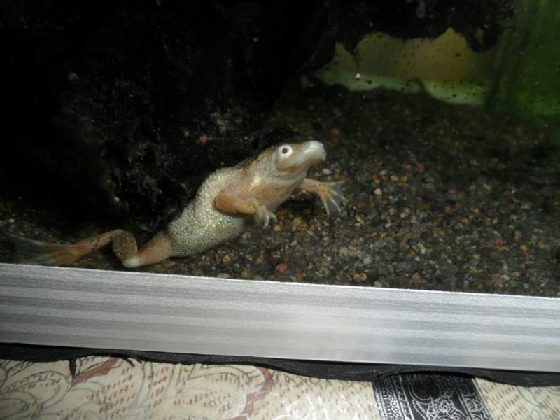 Mes grenouilles de petites tailles - Page 13 Sam_1618