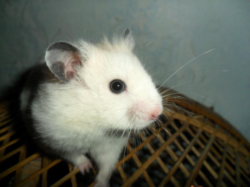 Un hamster nommé Dicoon - Page 2 Sam_1622