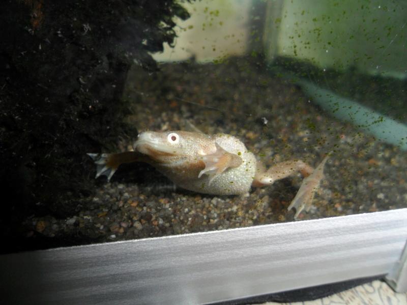 Mes grenouilles de petites tailles - Page 13 Sam_1812