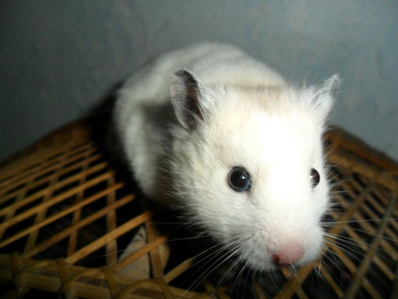 Un hamster nommé Dicoon - Page 2 Sam_1832