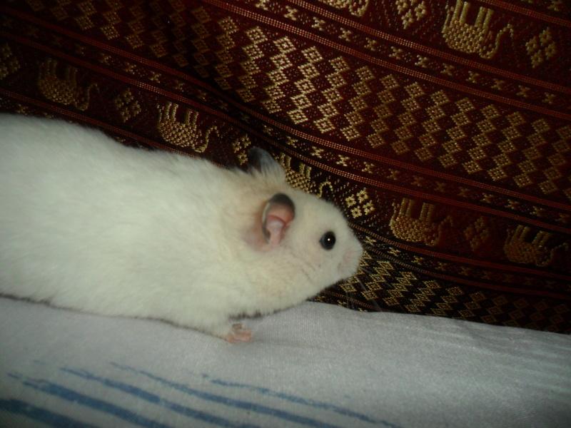 Un hamster nommé Dicoon - Page 2 Sam_1916