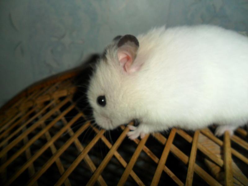 Un hamster nommé Dicoon - Page 2 Sam_1917