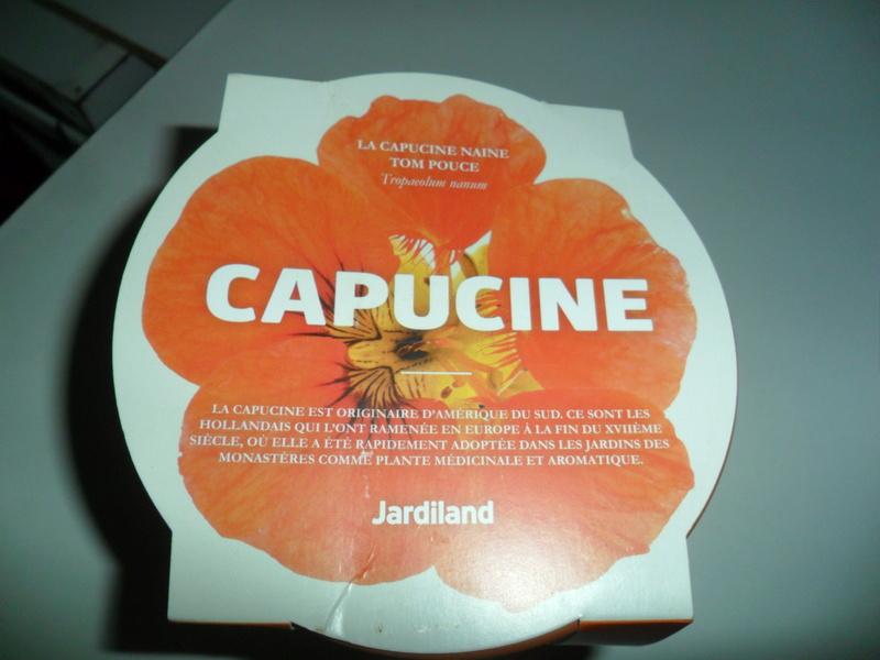 Capucine en cadeau de chez jardiland Sam_2013