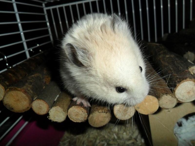 Un hamster nommé Dicoon - Page 2 Sam_2322
