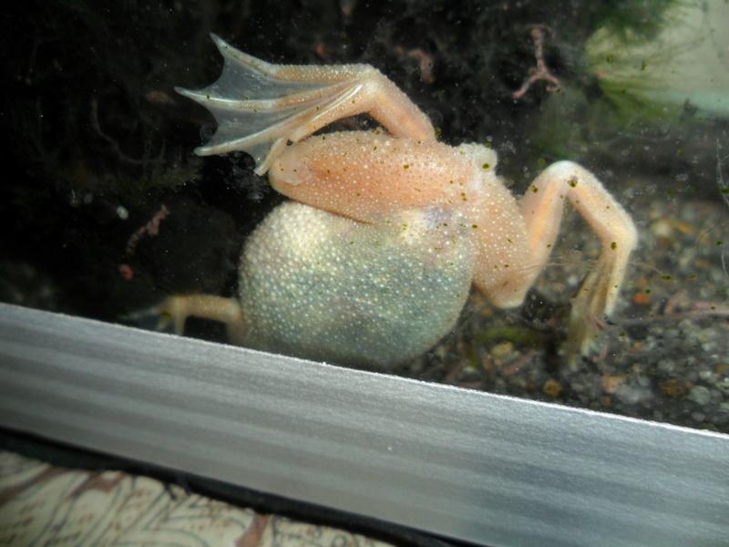 Mes grenouilles de petites tailles - Page 14 Sam_2813