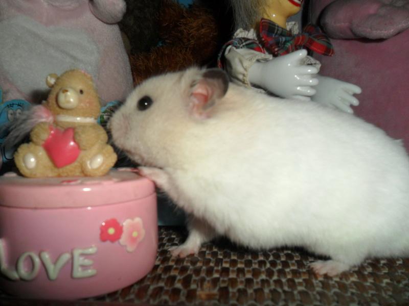 Un hamster nommé Dicoon - Page 2 Sam_3514