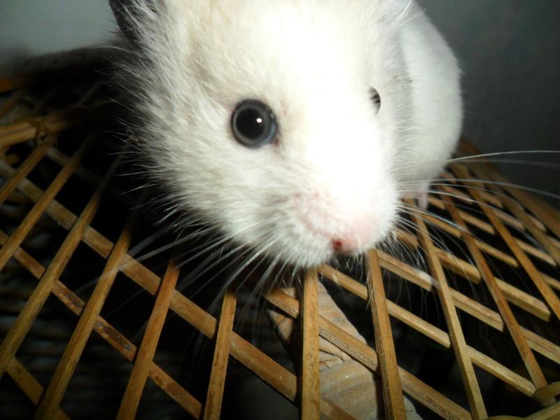 Un hamster nommé Dicoon - Page 2 Sam_3515