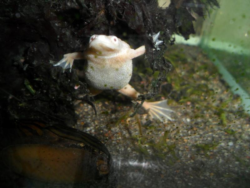Mes grenouilles de petites tailles - Page 14 Sam_4015