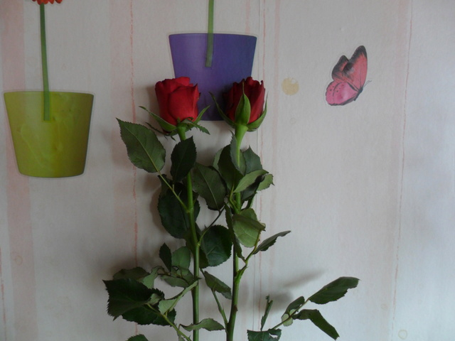Deux roses de fète des mères Sam_4043