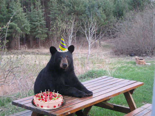 Bon anniversaire baloo07 Projet10