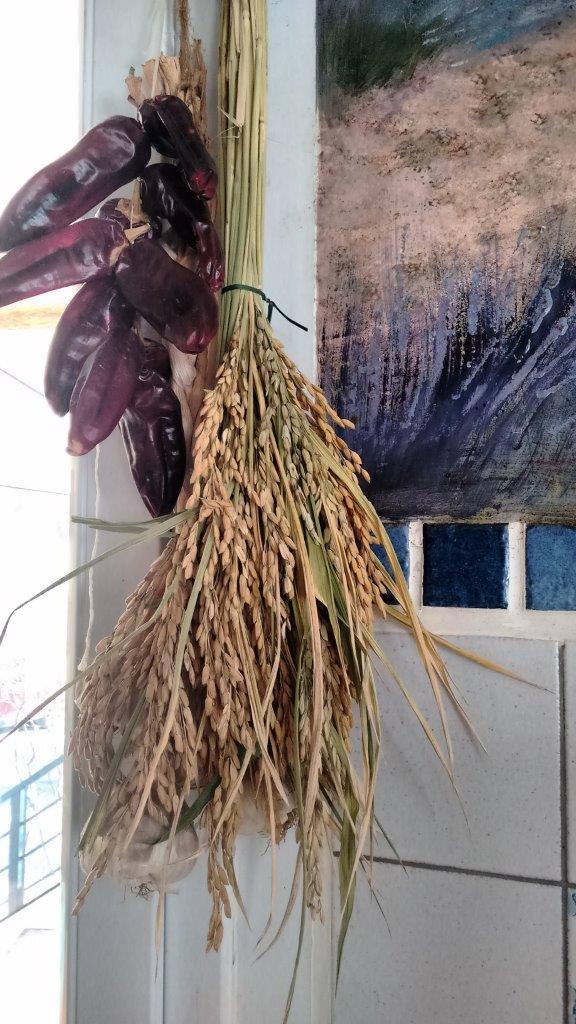 Culture du riz de Camargue .. au Puy ... Graine10