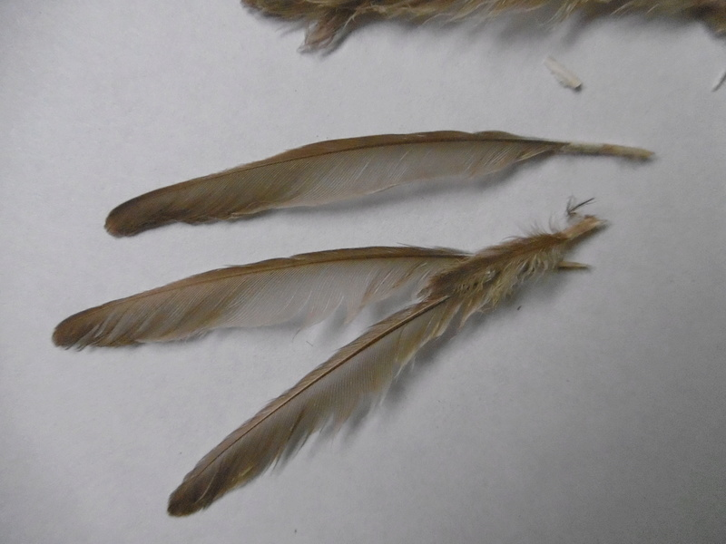2 identification ^^ P1010915