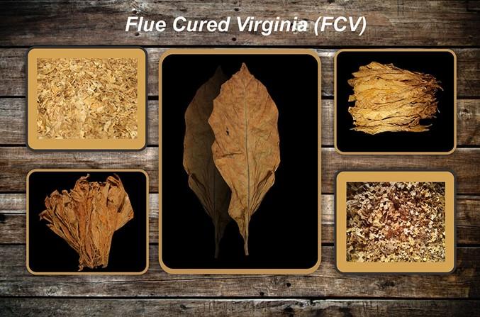 Le séchage des feuilles de tabac Flue211
