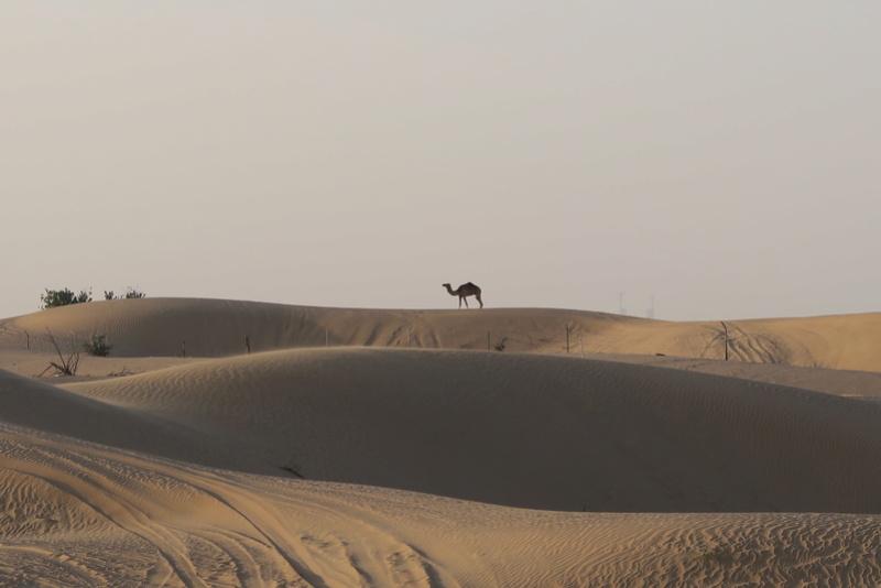 [ÉAU] Pré-TR pour voyage à Dubai en 2018 - Page 3 Img_0229