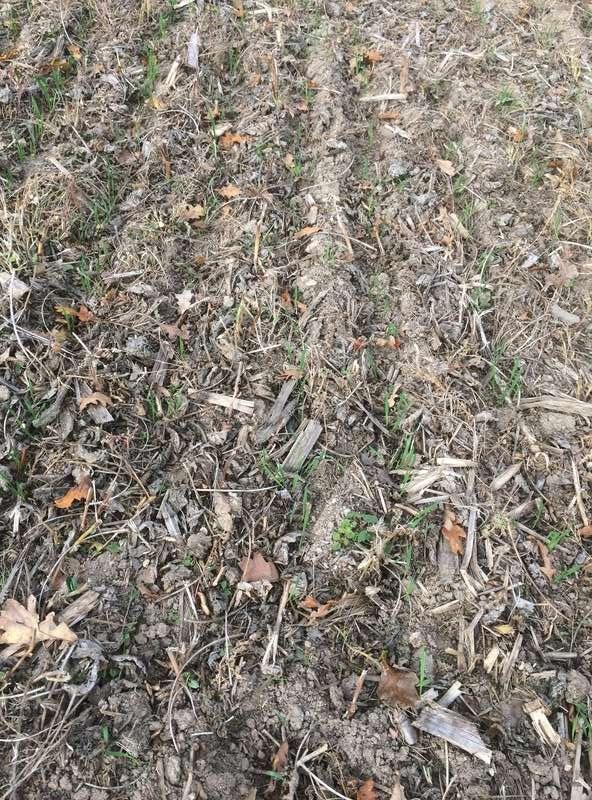 Semi direct de blé après soja Img_4210