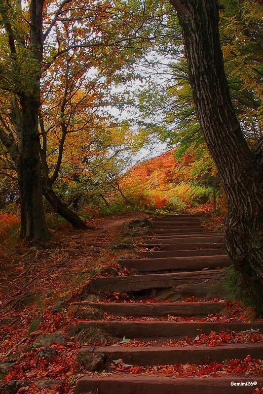 Escalier automnal Pa150410