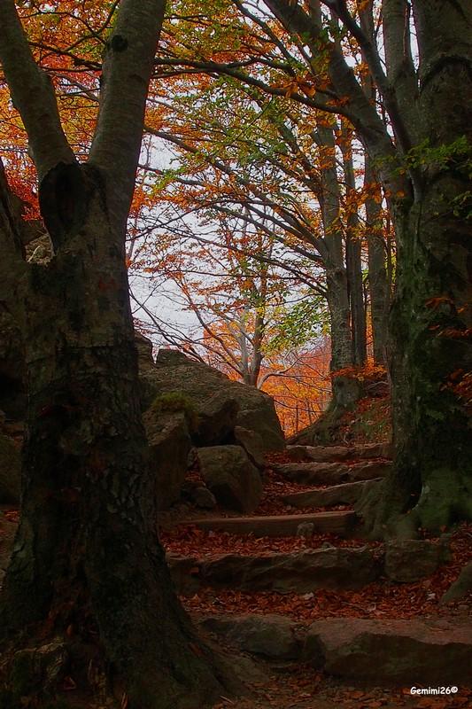 Escalier automnal Pa150412
