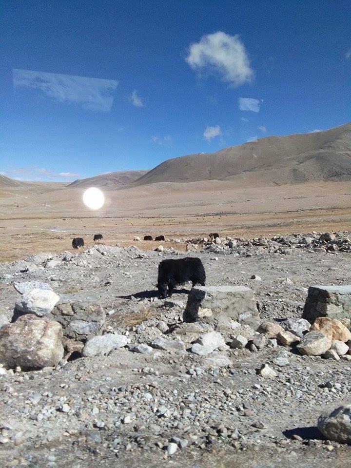 সুন্দরী সিকিমের সঙ্গ - যাপন sundari Sikkim 25276310