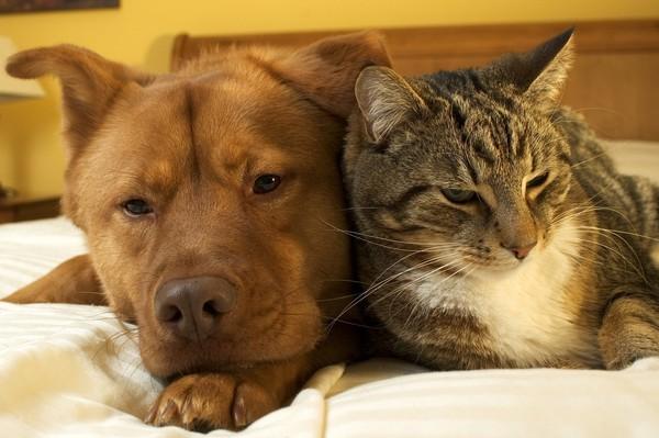 """Vote sur le thème """"La tendresse animal""""  991ed211"""