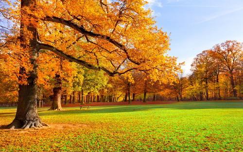 Belle image du jour Nature10