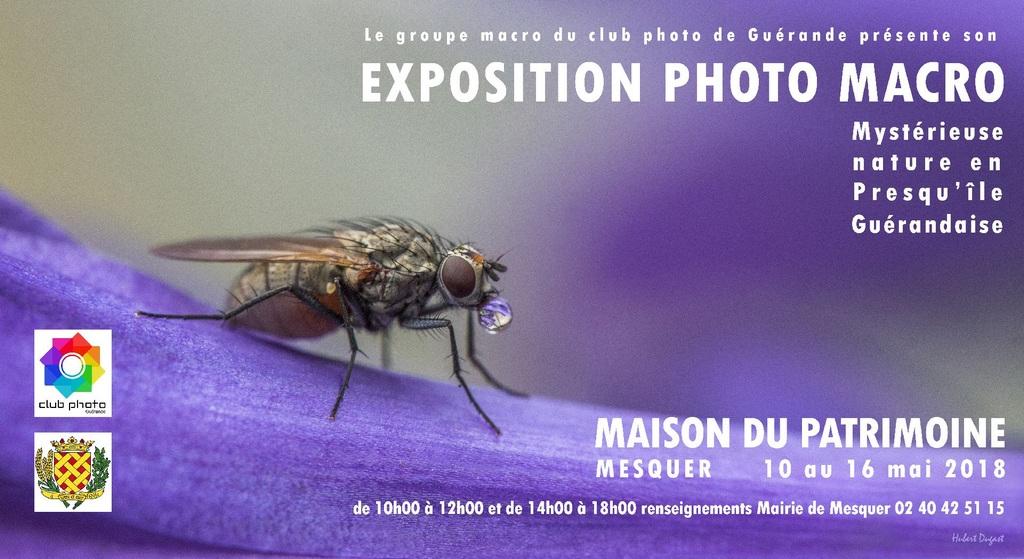 Mystérieuse nature en Presqu'île Guérandaise. Flyer110