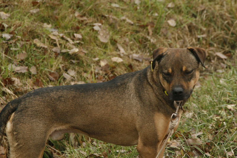OSCAR - mâle, né environ avril 2012, taille moyenne - En FA chez DarkKing (42) replacé en FA chez Sylvie (02)  - Page 10 _mg_3510