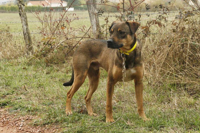 OSCAR - mâle, né environ avril 2012, taille moyenne - En FA chez DarkKing (42) replacé en FA chez Sylvie (02)  - Page 10 _mg_3515