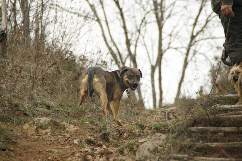 OSCAR - mâle, né environ avril 2012, taille moyenne - En FA chez DarkKing (42) replacé en FA chez Sylvie (02)  - Page 10 _mg_3517
