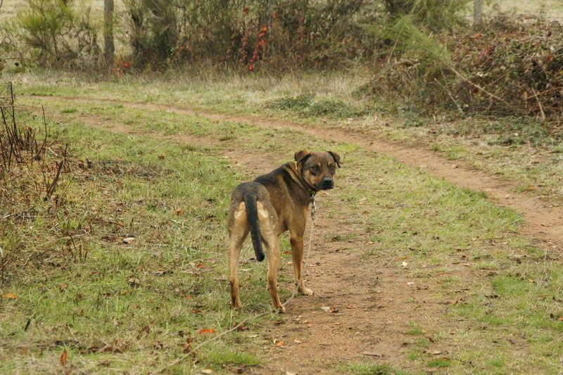 OSCAR - mâle, né environ avril 2012, taille moyenne - En FA chez DarkKing (42) replacé en FA chez Sylvie (02)  - Page 10 _mg_3520