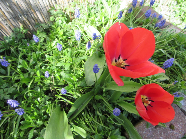 Welcome to my garden: hérissonne enceinte ? - Page 3 Img_6314