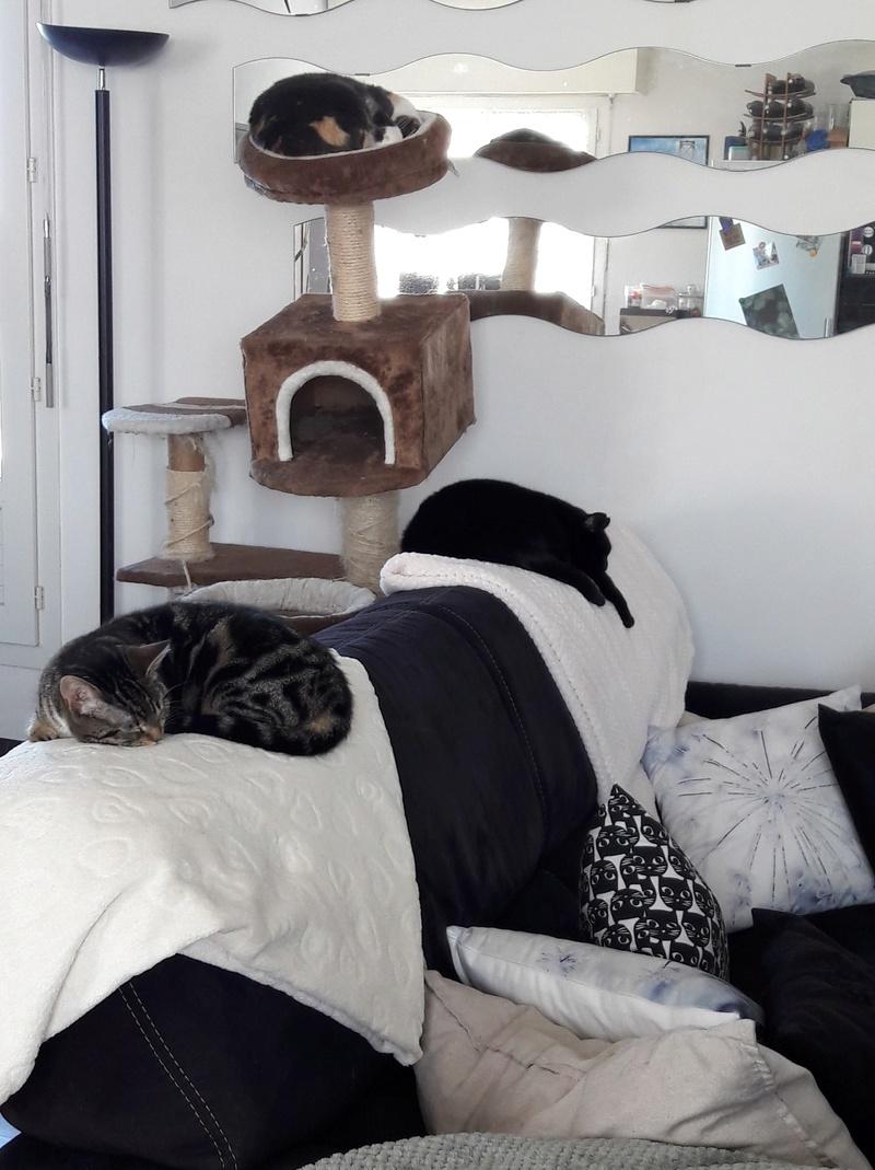 lisbeth - LISBETH, chatte européenne tricolore, née en 2015. 30825310