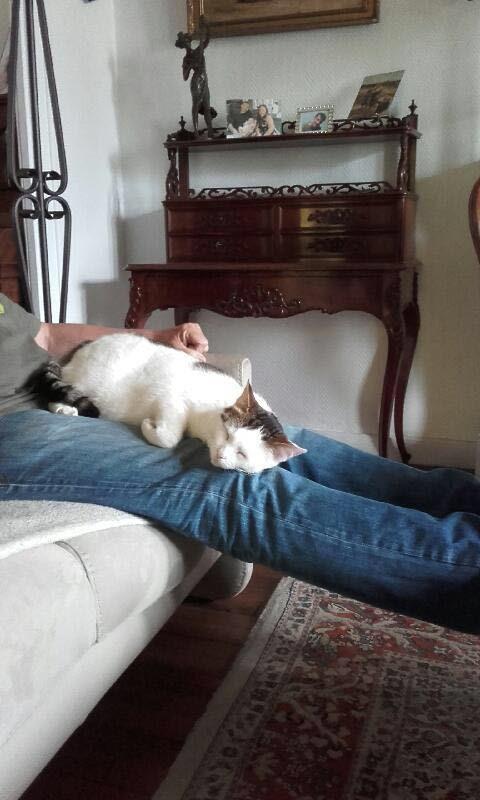 JENNIFER, chatte européenne blanche et tigrée, née en 2014. Img-2016