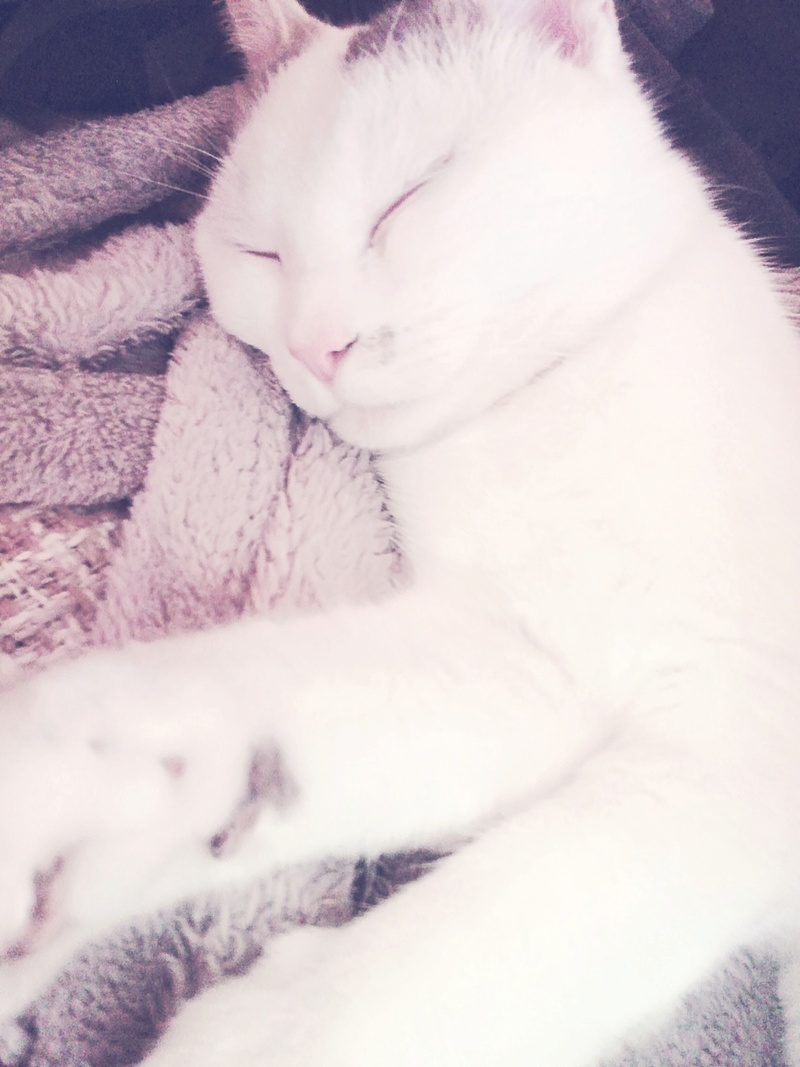 mango - MANGO, chat européen blanc&tigré gris, né en novembre 2016 Img_2036