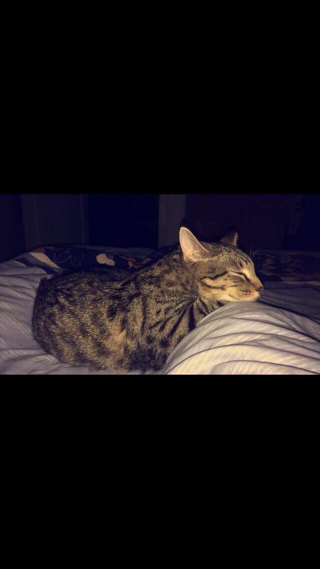 NIKEL, chat mâle tigré, né le 22 mai 2017 Img_5610