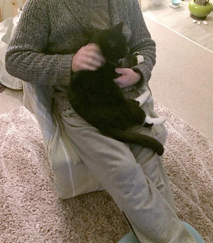 jevris - Jevris - chat mâle européen noir et blanc - nė en 2014 Img_9316
