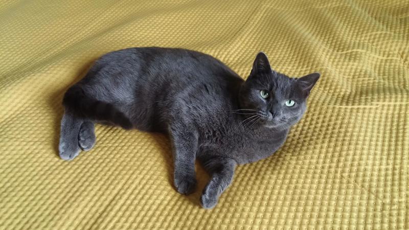 maki - Maki - male - gris - type européen -  né en juin 2016 Unname10