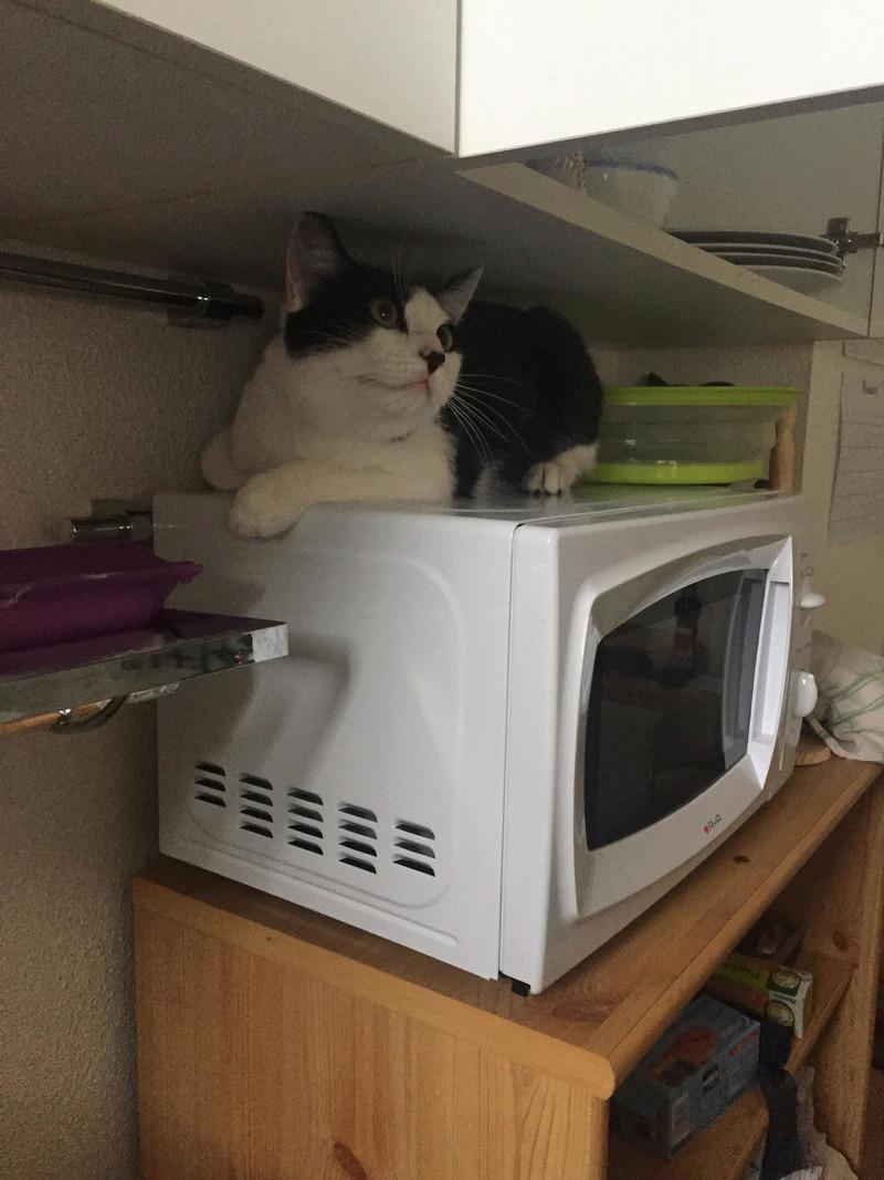 Oréo, chaton mâle noir et blanc né le 20 mai 2018. Unname27