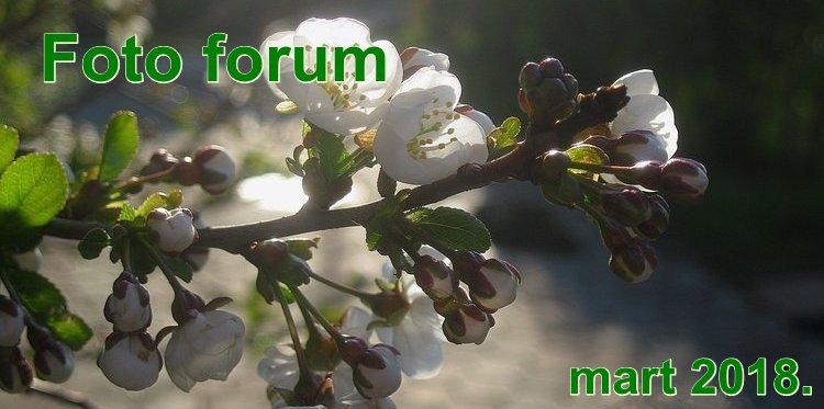 Foto-forum u slici - Page 28 1rrr12