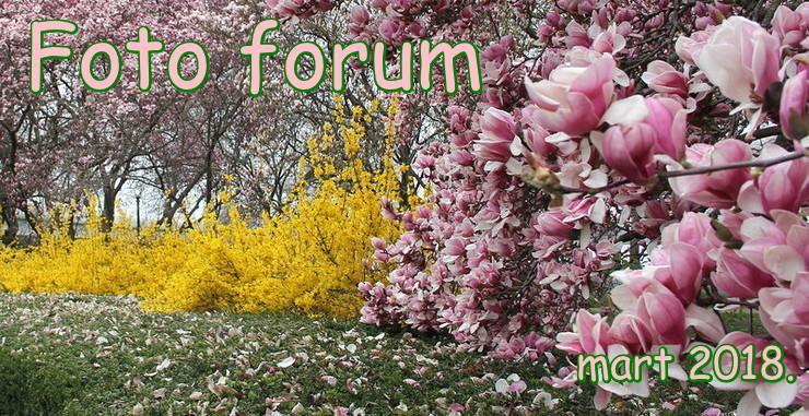 Foto-forum u slici - Page 28 1rrrr14